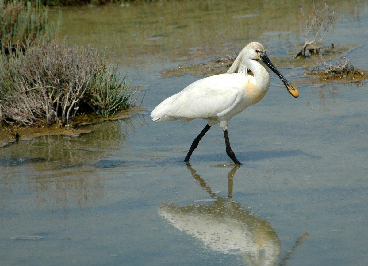 Ontdek de vogels van de Zuidwestelijke Delta!