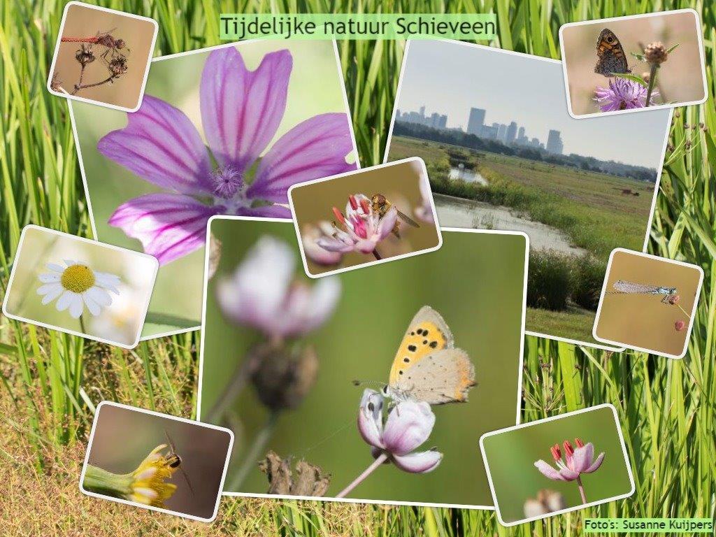 Tijdelijke Natuur biedt kansen voor biodiversiteit én voor terreineigenaren