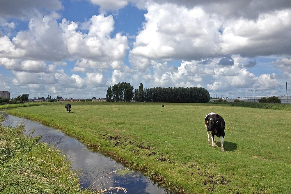 Voorstel Landbouw Collectief biedt geen lange termijn oplossing