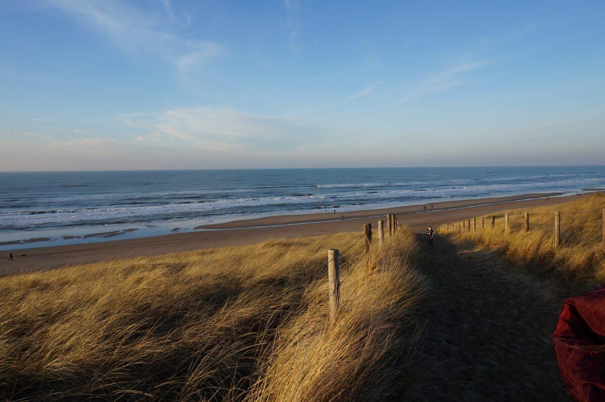 Blog: Berkheide, duinparel langs de Hollandse Kust