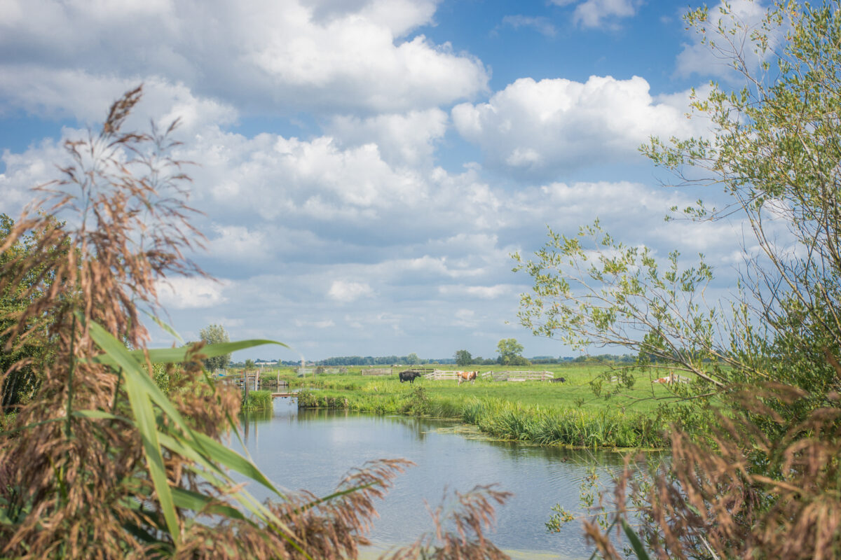 Blog: Krimpenerwaard parel van Zuid-Holland, maar hoelang nog?