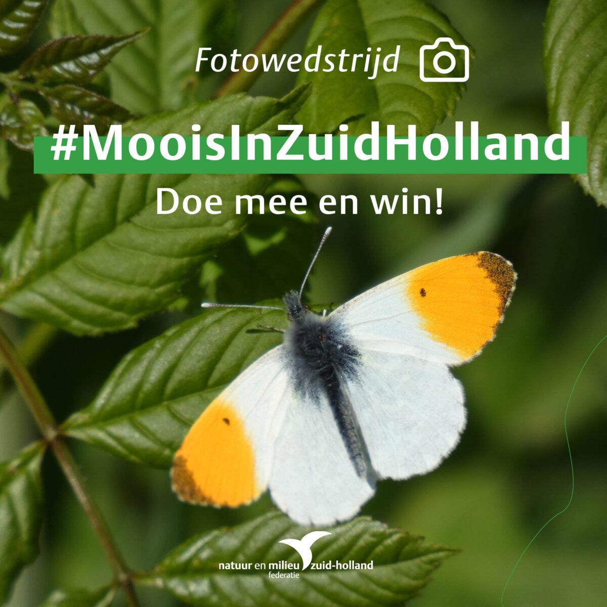 'Moois in Zuid-Holland' fotowedstrijd