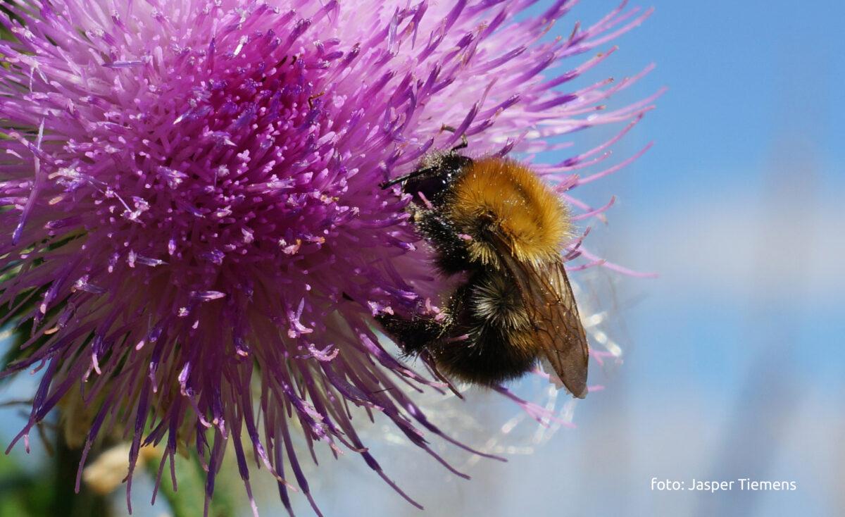 Innovatiefonds 'Samen voor biodiversiteit' gelanceerd
