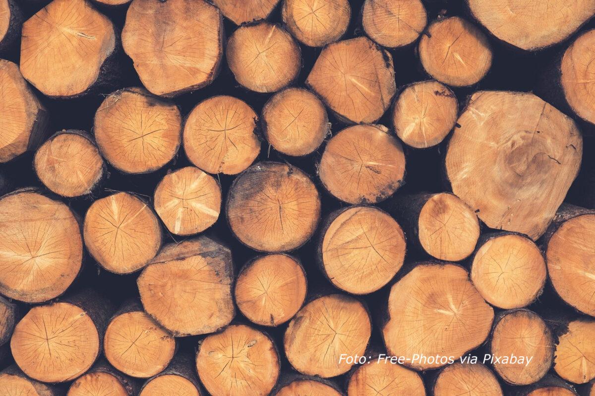 Oproep aan minister Wiebes: Stop bijstook van biomassa in kolencentrales