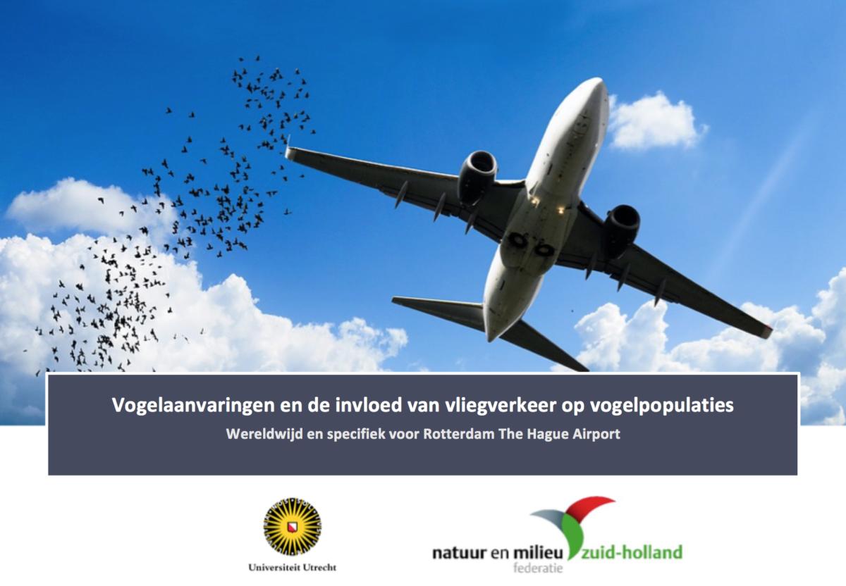 Conflict vogels en vliegtuigen: effectieve maatregelen mogelijk