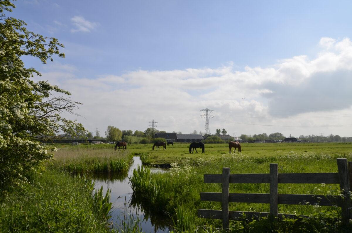 Oproep aan de provincie Zuid-Holland: Kies voor een duurzaam perspectief voor boeren via het Nationaal Strategisch Plan (GLB)